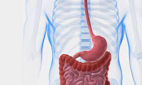 جراحة-الجهاز-الهضمي